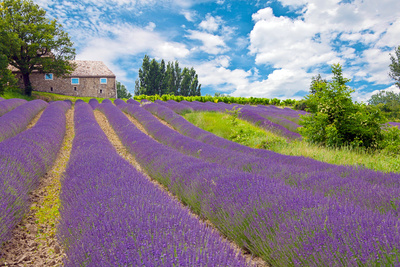Acheter maison Ardèche Sud - Bas-Vivarai